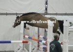 210215118 Asterhof's Emiel (Woodrow Carisbrooke x Luckington Sportaide)-003.JPG